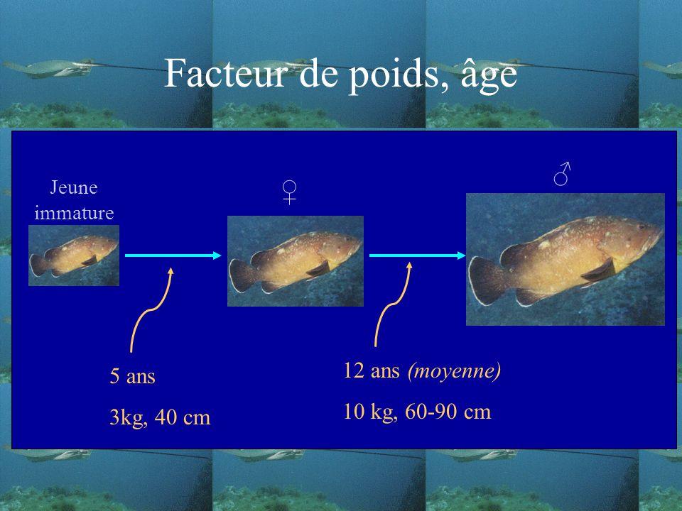 Facteur de poids, âge Jeune immature 5 ans 3kg, 40 cm 12 ans (moyenne) 10 kg, 60-90 cm