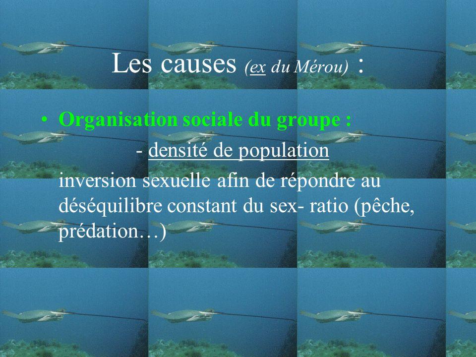 Les causes (ex du Mérou) : Organisation sociale du groupe : - densité de population inversion sexuelle afin de répondre au déséquilibre constant du sex- ratio (pêche, prédation…)