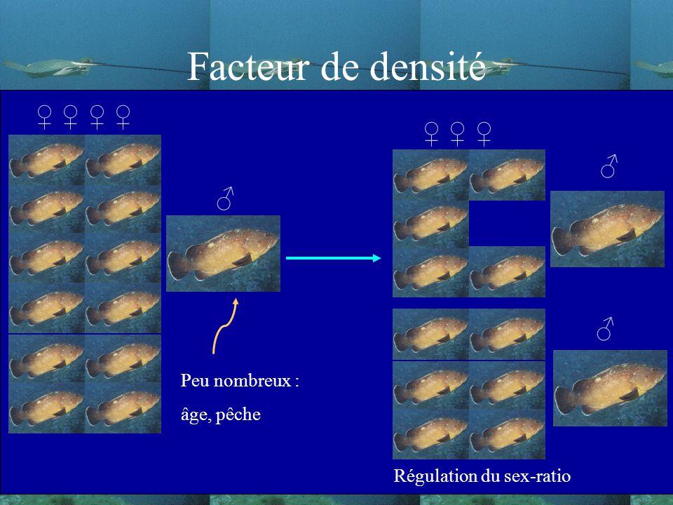Facteur de densité Régulation du sex-ratio Peu nombreux : âge, pêche