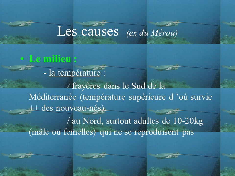 Les causes (ex du Mérou) Le milieu : - la température : / frayères dans le Sud de la Méditerranée (température supérieure d où survie ++ des nouveau-nés).