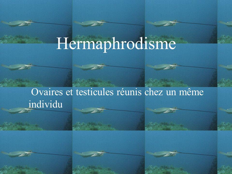 Hermaphrodisme Ovaires et testicules réunis chez un même individu