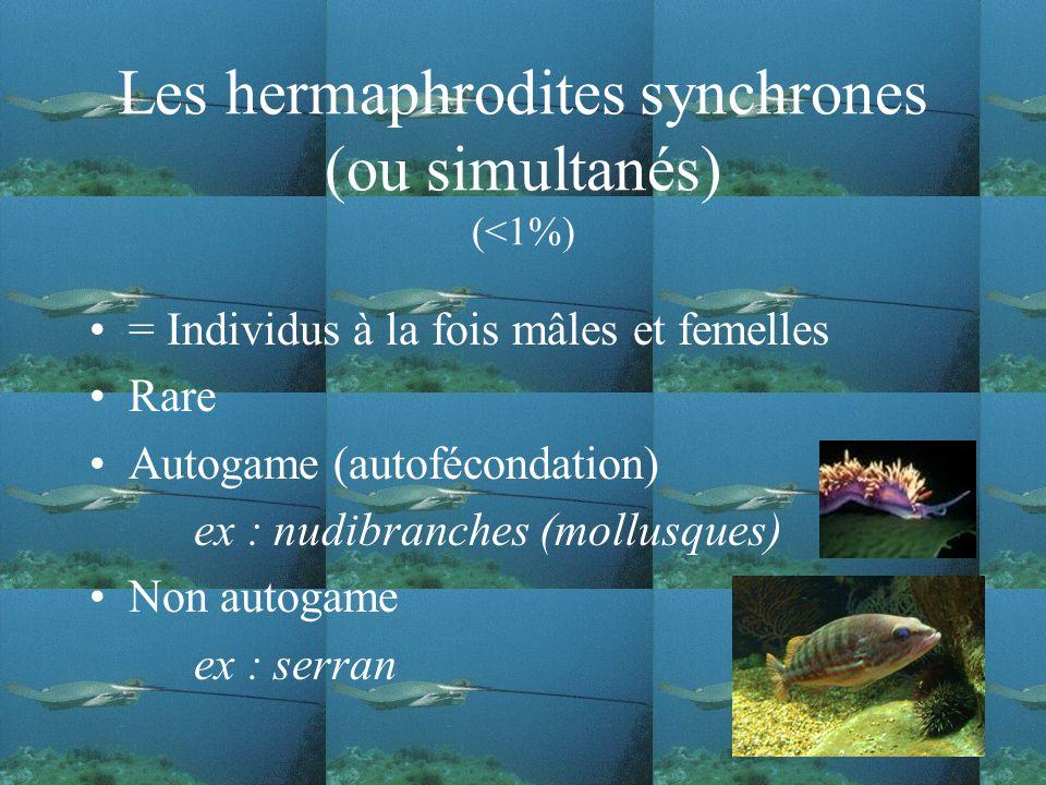 Les hermaphrodites synchrones (ou simultanés) (<1%) = Individus à la fois mâles et femelles Rare Autogame (autofécondation) ex : nudibranches (mollusques) Non autogame ex : serran