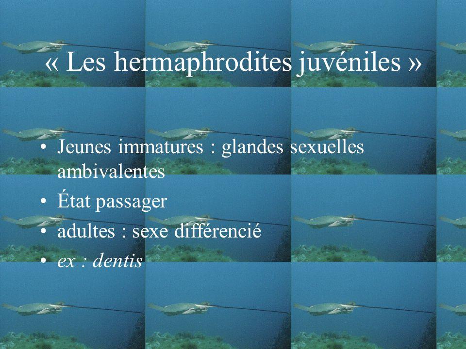 « Les hermaphrodites juvéniles » Jeunes immatures : glandes sexuelles ambivalentes État passager adultes : sexe différencié ex : dentis