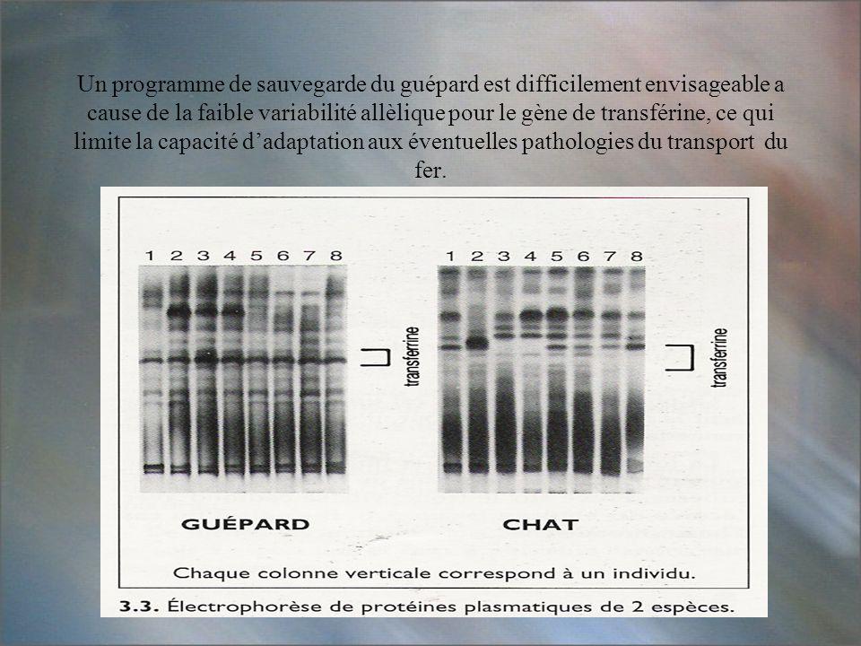 Un programme de sauvegarde du guépard est difficilement envisageable a cause de la faible variabilité allèlique pour le gène de transférine, ce qui li
