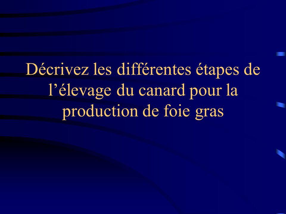 Décrivez les différentes étapes de lélevage du canard pour la production de foie gras