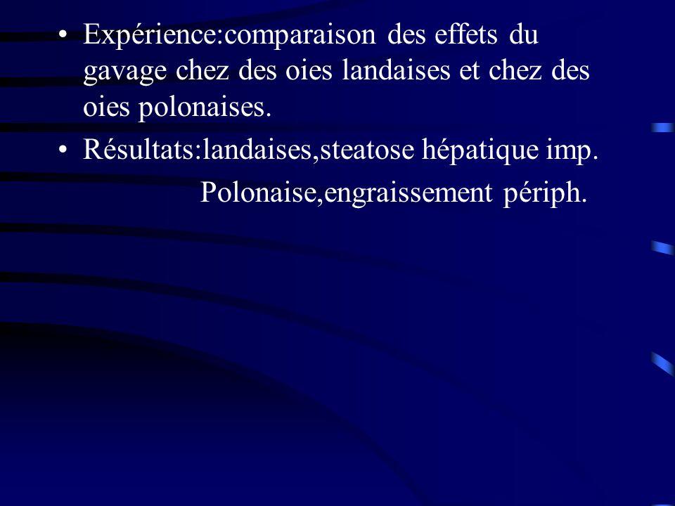 Expérience:comparaison des effets du gavage chez des oies landaises et chez des oies polonaises. Résultats:landaises,steatose hépatique imp. Polonaise