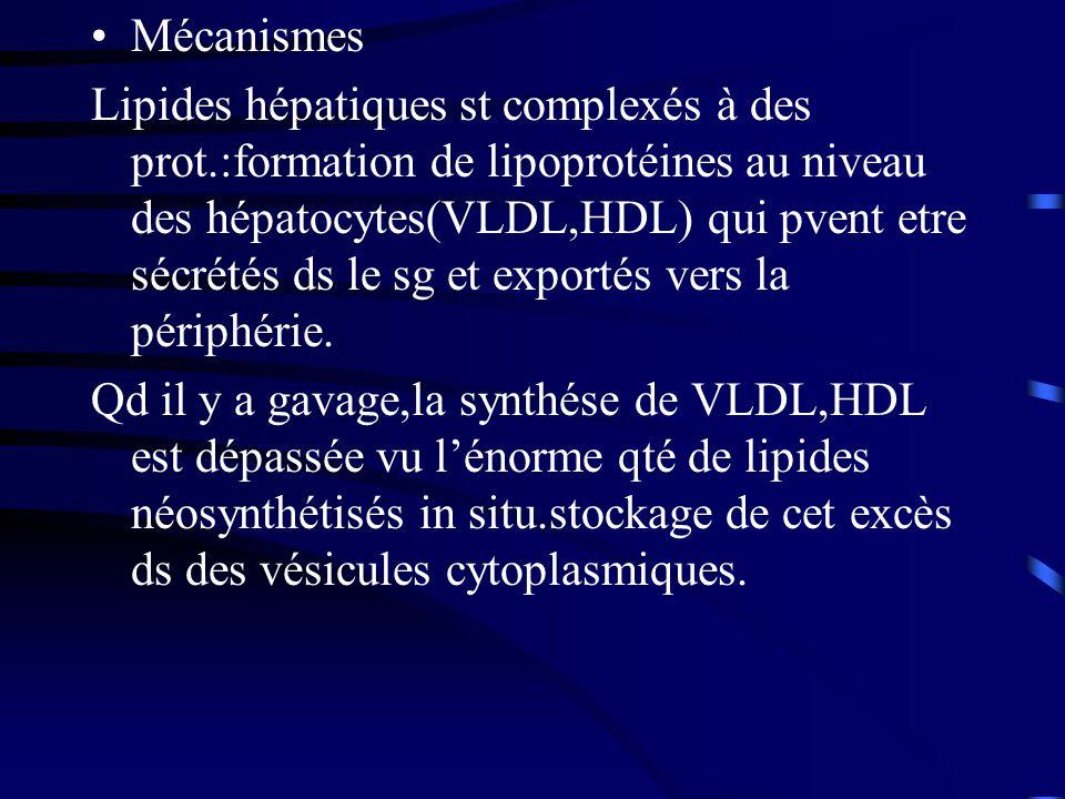 Mécanismes Lipides hépatiques st complexés à des prot.:formation de lipoprotéines au niveau des hépatocytes(VLDL,HDL) qui pvent etre sécrétés ds le sg
