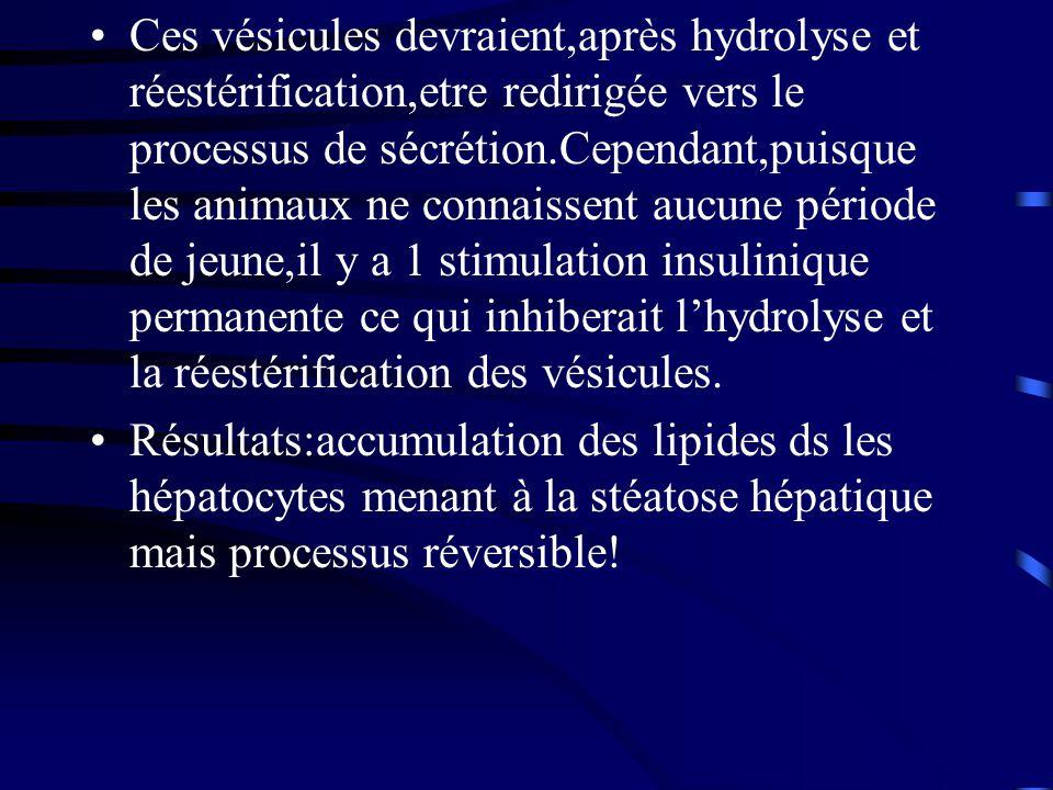 Ces vésicules devraient,après hydrolyse et réestérification,etre redirigée vers le processus de sécrétion.Cependant,puisque les animaux ne connaissent