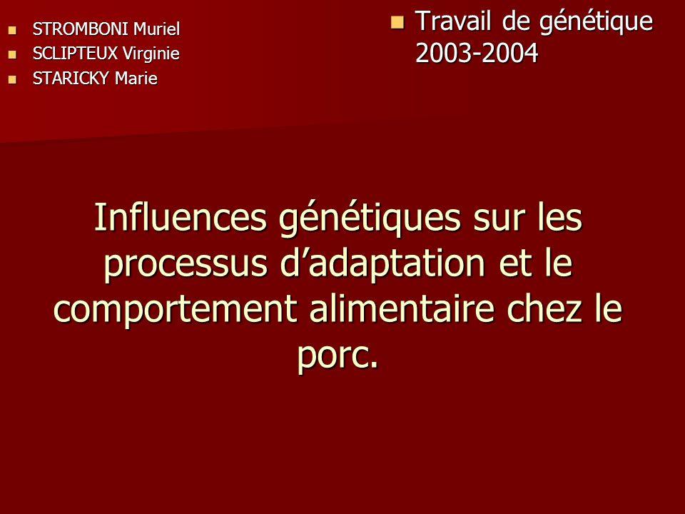 Influences génétiques sur les processus dadaptation et le comportement alimentaire chez le porc. STROMBONI Muriel STROMBONI Muriel SCLIPTEUX Virginie