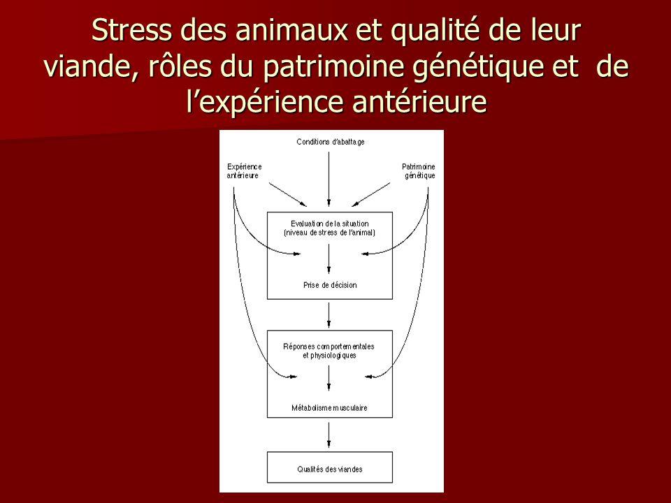 Stress des animaux et qualité de leur viande, rôles du patrimoine génétique et de lexpérience antérieure