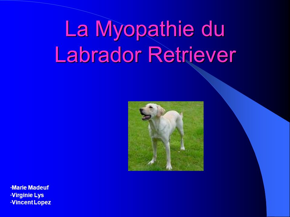 La Myopathie du Labrador Retriever ·Marie Madeuf ·Virginie Lys ·Vincent Lopez