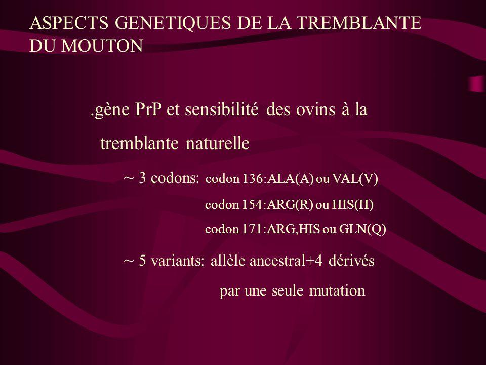 ASPECTS GENETIQUES DE LA TREMBLANTE DU MOUTON.gène PrP et sensibilité des ovins à la tremblante naturelle ~ 3 codons: codon 136:ALA(A) ou VAL(V) codon
