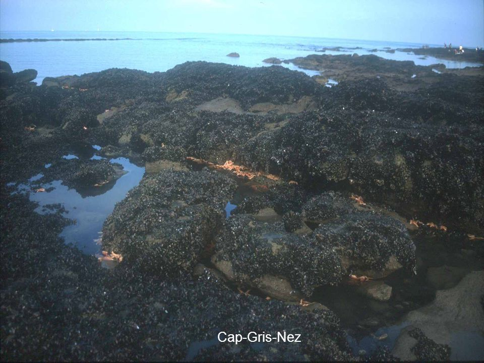 Cap-Gris-Nez