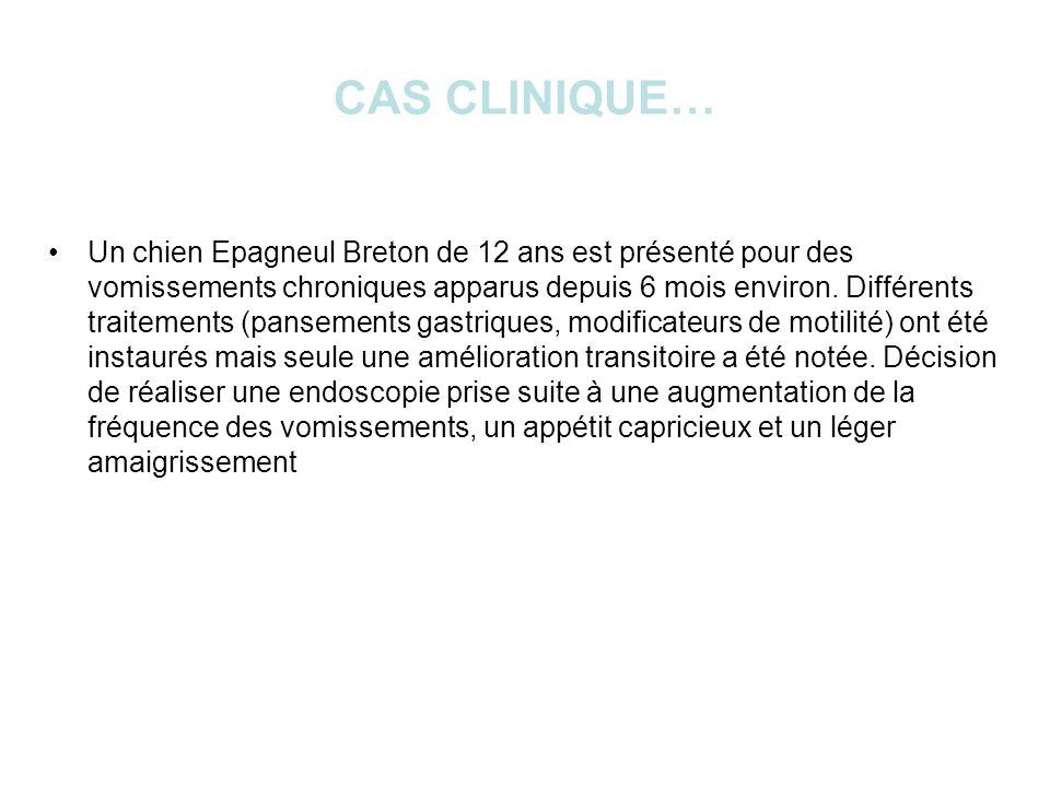 CAS CLINIQUE… Un chien Epagneul Breton de 12 ans est présenté pour des vomissements chroniques apparus depuis 6 mois environ.