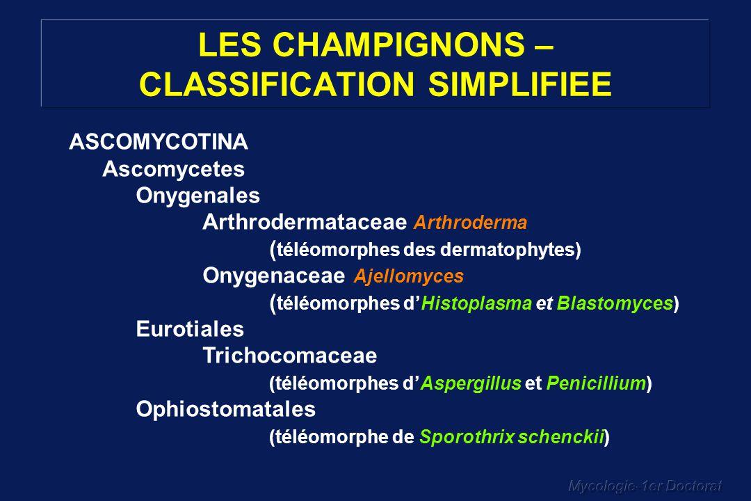 Mycologie-1er Doctorat LES CHAMPIGNONS – CLASSIFICATION SIMPLIFIEE ASCOMYCOTINA Ascomycetes Onygenales Arthrodermataceae Arthroderma ( téléomorphes de
