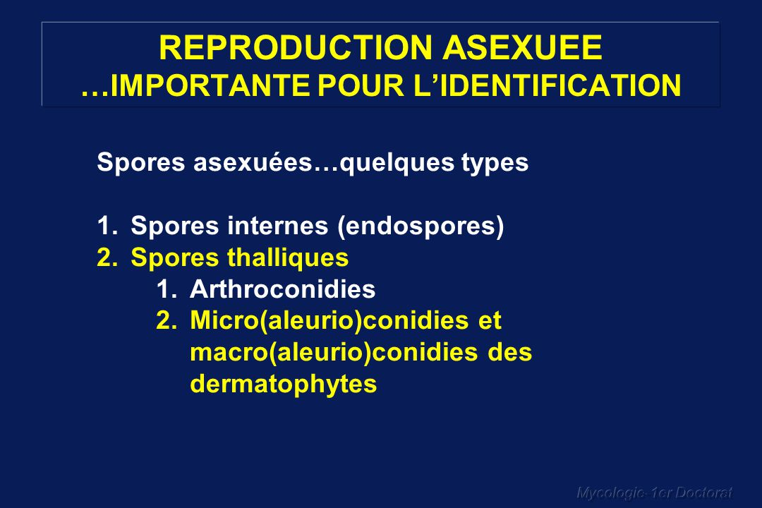 Mycologie-1er Doctorat REPRODUCTION ASEXUEE …IMPORTANTE POUR LIDENTIFICATION Spores asexuées…quelques types 1.Spores internes (endospores) 2.Spores th