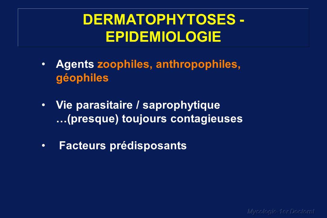Mycologie-1er Doctorat DERMATOPHYTOSES - EPIDEMIOLOGIE Agents zoophiles, anthropophiles, géophiles Vie parasitaire / saprophytique …(presque) toujours