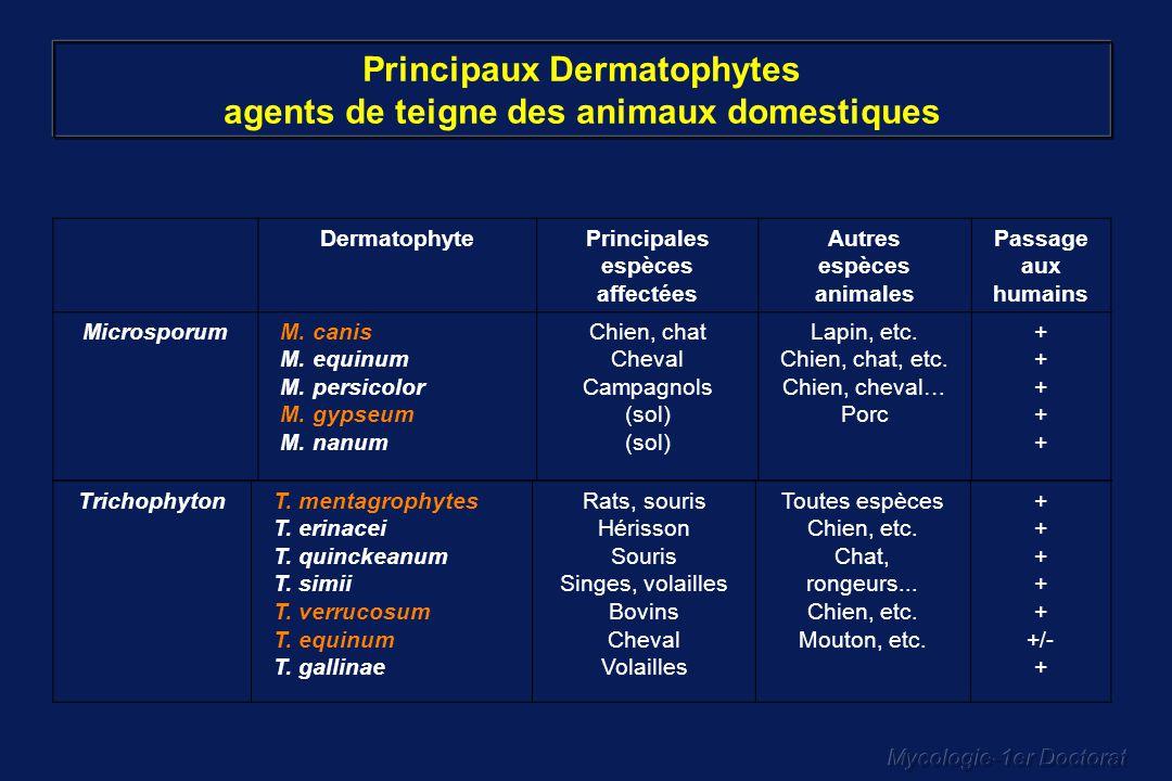 Mycologie-1er Doctorat DermatophytePrincipales espèces affectées Autres espèces animales Passage aux humains MicrosporumM. canis M. equinum M. persico