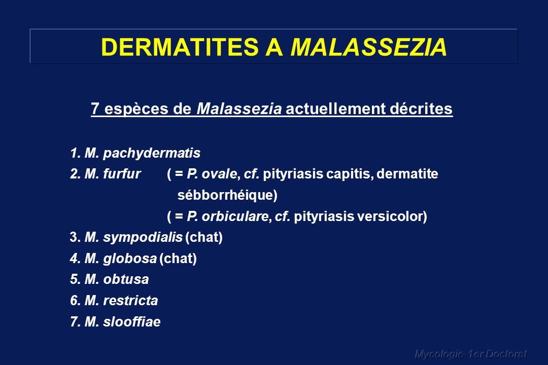 Mycologie-1er Doctorat DERMATITES A MALASSEZIA 7 espèces de Malassezia actuellement décrites 1. M. pachydermatis 2. M. furfur ( = P. ovale, cf. pityri