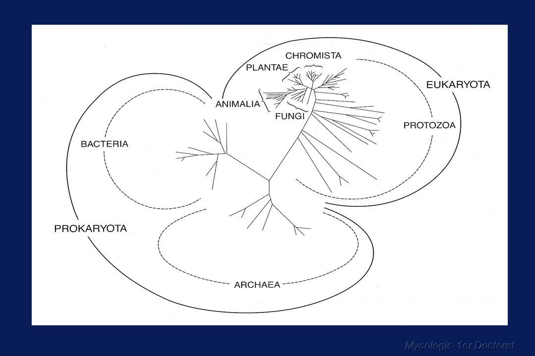 LES CHAMPIGNONS MORPHOLOGIE GENERALE Moisissures (champignons filamenteux) - mycélium = thalle constitué des hyphes ou filaments mycéliens - cloisons transversales = septa Levures Spores Notion de dimorphisme, pléomorphisme