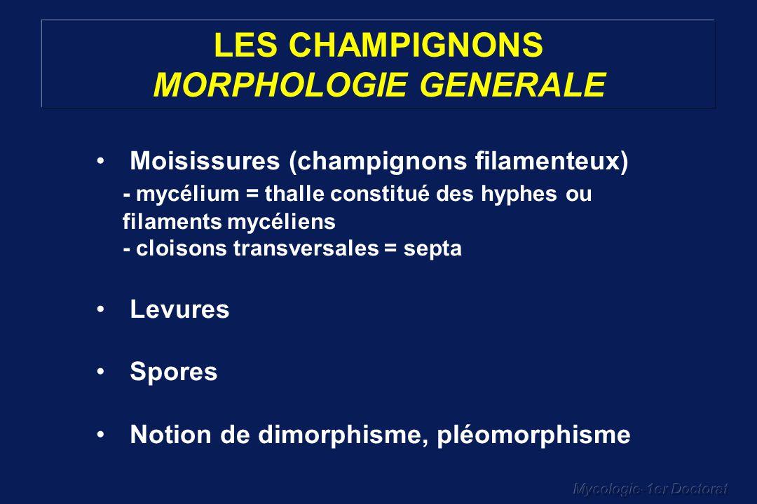 Mycologie-1er Doctorat LES CHAMPIGNONS – CLASSIFICATION SIMPLIFIEE CHAMPIGNONS MITOSPORIQUES Hyphomycetes Dematiaceaeagents de phaeohyphomycose Alternaria MoniliaceaeMicrosporum, Trichophyton, Epidermophyton, Histoplasma, Blastomyces, Coccidioides, Paracoccidioides, Aspergillus, Penicillium,… Coelomycetes Blastomycetes: anamorphes de levures