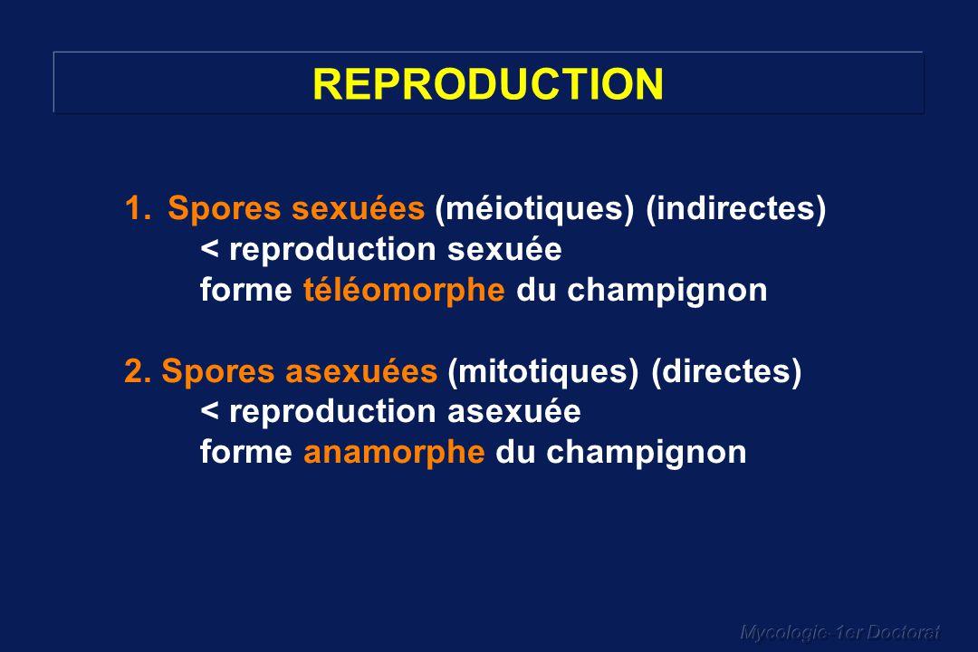 Mycologie-1er Doctorat IMPORTANTE… REPRODUCTION SEXUEE… POUR LA CLASSIFICATION