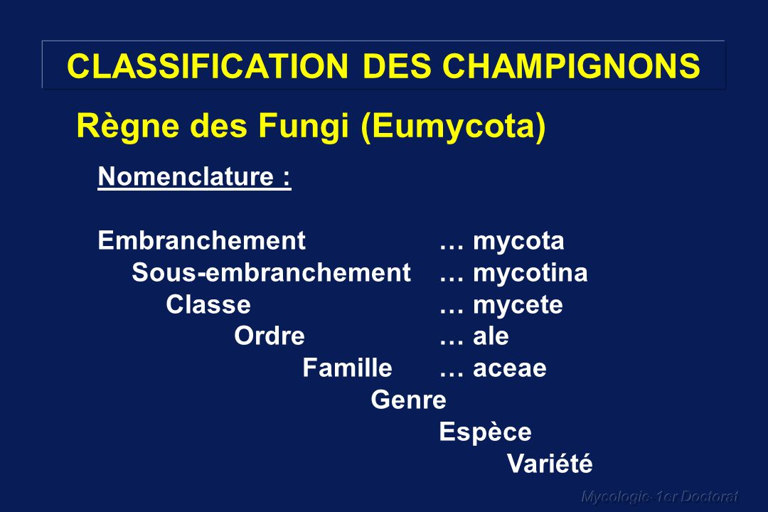 Mycologie-1er Doctorat CLASSIFICATION DES CHAMPIGNONS Nomenclature : Embranchement… mycota Sous-embranchement… mycotina Classe… mycete Ordre … ale Fam