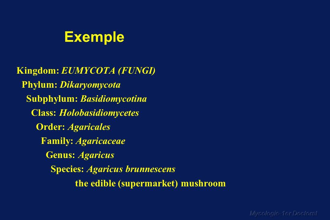 Mycologie-1er Doctorat CLASSIFICATION SIMPLIFIEE DES MYCOSES (4) Mycoses profondes les plus fréquentes Cosmopolites 1.