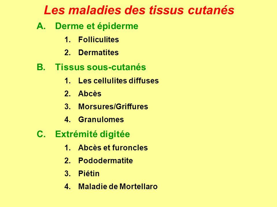 BOTRYOMYCOSE (chevaux) BOTRYOMYCOME = altérations hyperplasiques du tissu conjonctif Etiologie Staphylococcus aureus sous forme de zooglées: les bactéries sont assemblées en amas et englobées dans une gangue gélatineuse commune Incidence surtout chez le cheval (porc, bœuf) Pathogénie -infection dune plaie (castration, blessure) -réaction inflammatoire: accumulation de cellules -formation dun pseudotubercule = botryomycome -transformation purulente: fistulisation -pyémie et localisations viscérales (rares) Les maladies des tissus cutanés