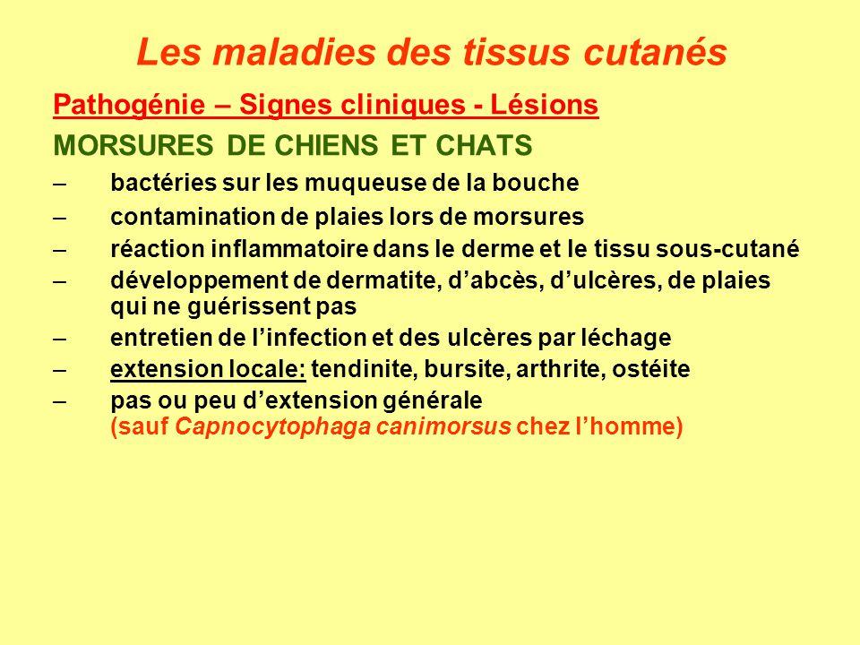 Pathogénie – Signes cliniques - Lésions MORSURES DE CHIENS ET CHATS –bactéries sur les muqueuse de la bouche –contamination de plaies lors de morsures