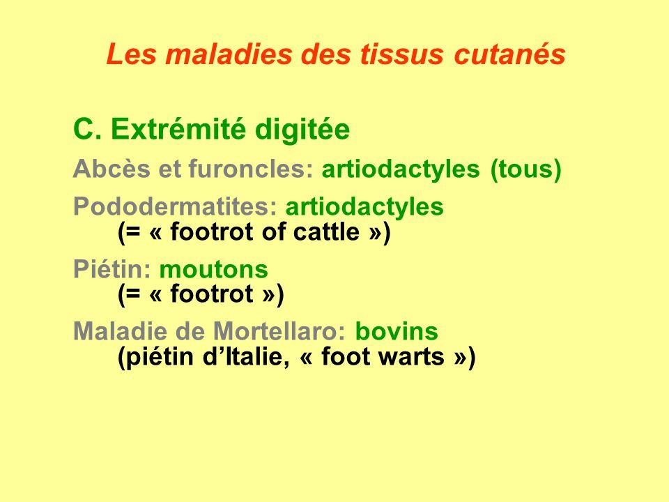 C. Extrémité digitée Abcès et furoncles: artiodactyles (tous) Pododermatites: artiodactyles (= « footrot of cattle ») Piétin: moutons (= « footrot »)