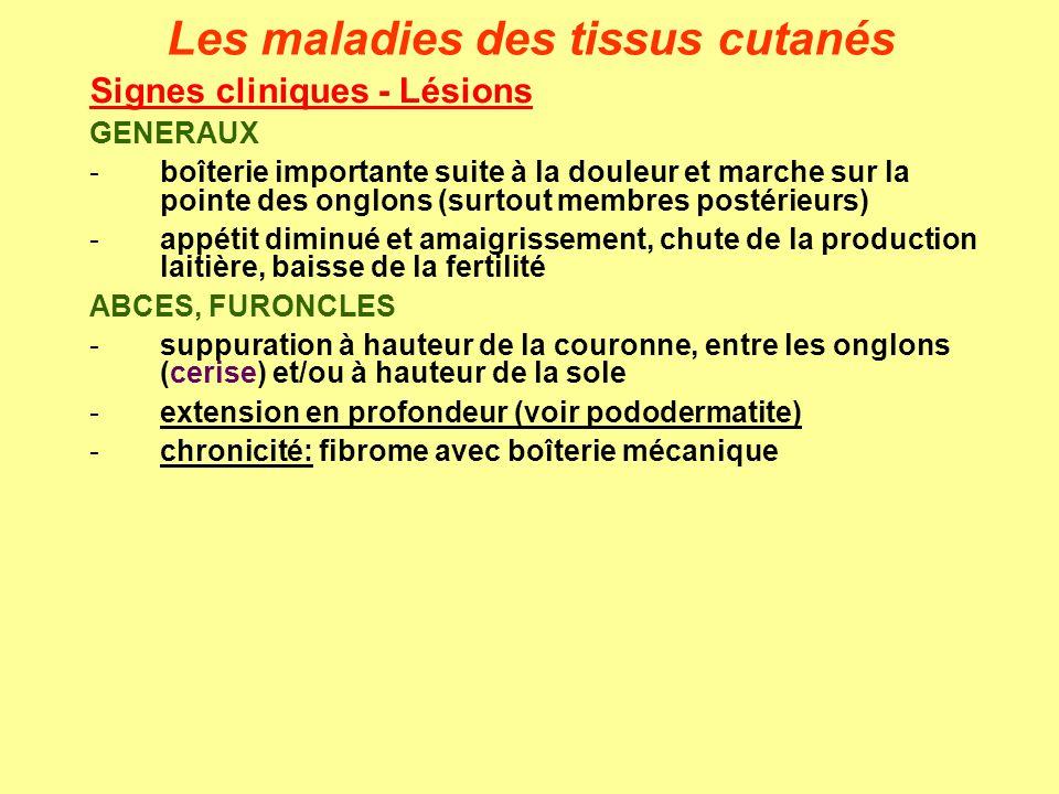 Signes cliniques - Lésions GENERAUX -boîterie importante suite à la douleur et marche sur la pointe des onglons (surtout membres postérieurs) -appétit