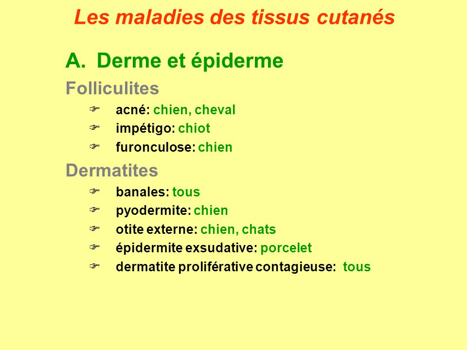 A.Derme et épiderme Folliculites acné: chien, cheval impétigo: chiot furonculose: chien Dermatites banales: tous pyodermite: chien otite externe: chie