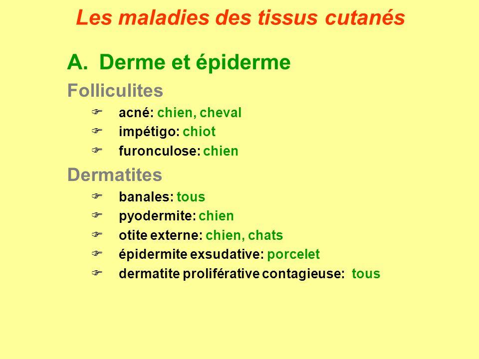 DERMATITES BANALESEtiologies Chien/chats: Staphylococcus intermedius, Streptococcus canis Cheval: Staphylococcus aureus, Staphylococcus intermedius, Corynebacterium pseudotuberculosis, Streptococcus zooepidemicus, Enterobacter spp.