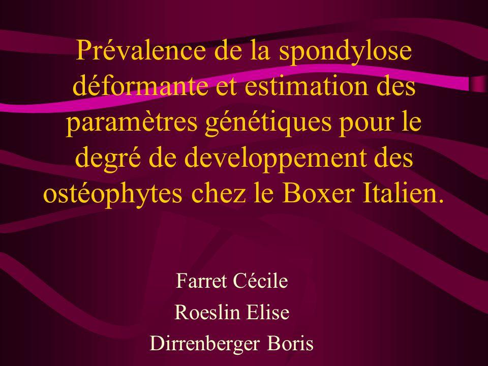Prévalence de la spondylose déformante et estimation des paramètres génétiques pour le degré de developpement des ostéophytes chez le Boxer Italien.