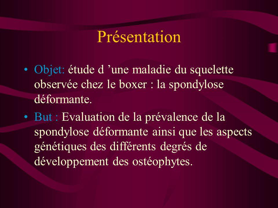 Présentation Objet: étude d une maladie du squelette observée chez le boxer : la spondylose déformante.