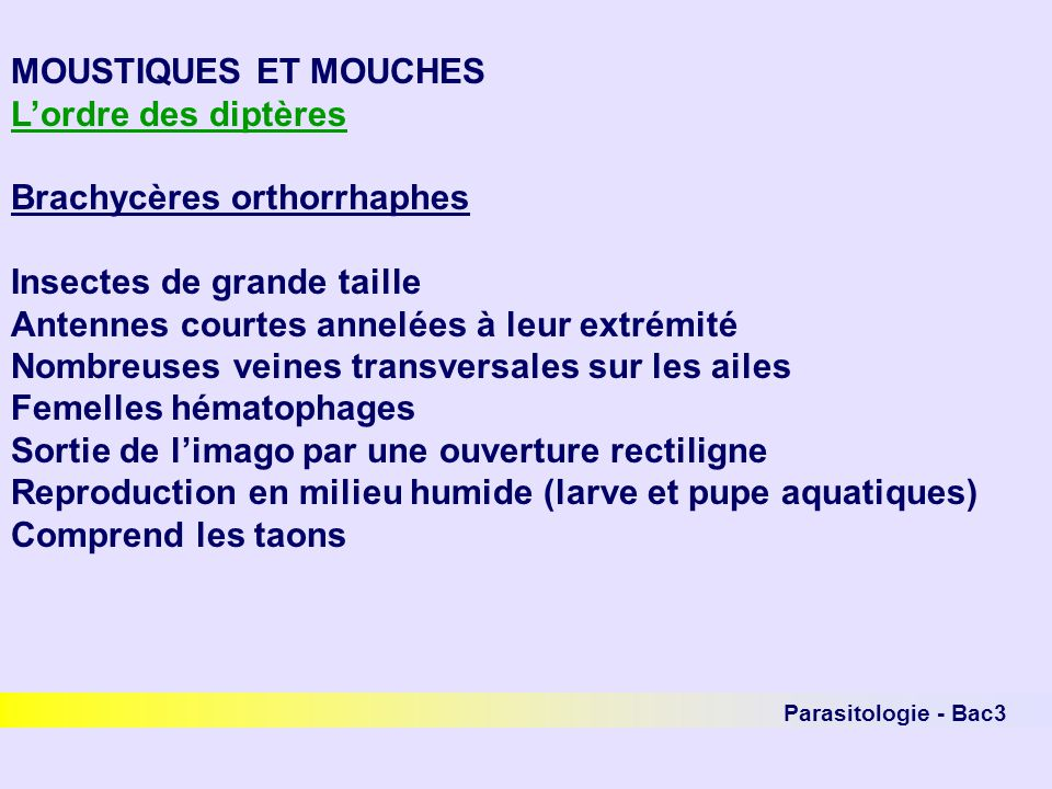 Parasitologie - Bac3 MOUSTIQUES ET MOUCHES Lordre des diptères Brachycères orthorrhaphes Insectes de grande taille Antennes courtes annelées à leur ex