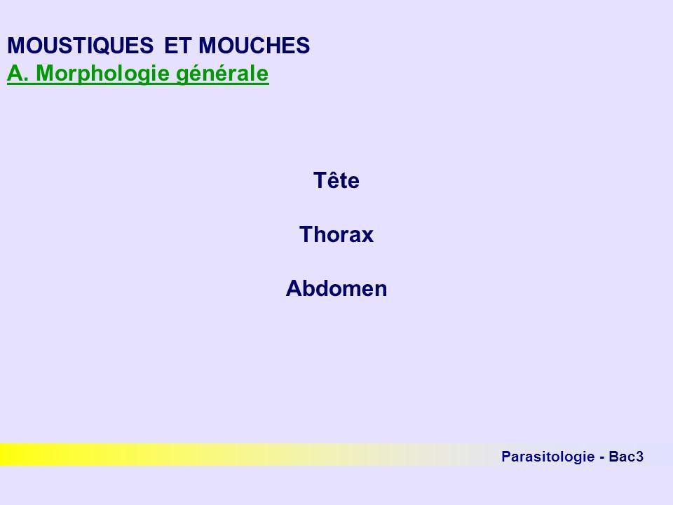 Parasitologie - Bac3 MOUSTIQUES ET MOUCHES Nématocères - famille des Ceratopogonidés Le genre Culicoïdes (Biting midges) Très petits insectes cosmopolites (1,5-5 mm) Thorax bossu, ailes tachetées, refermées au repos Seule la femelle est hématophage Activité du printemps à septembre Activité maximale de 19 à 22 heures Déplacements limités Reproduction liée à des endroits humides Cycle de durée variable en fonction de la température Impliqué dans létiologie de la gale dété