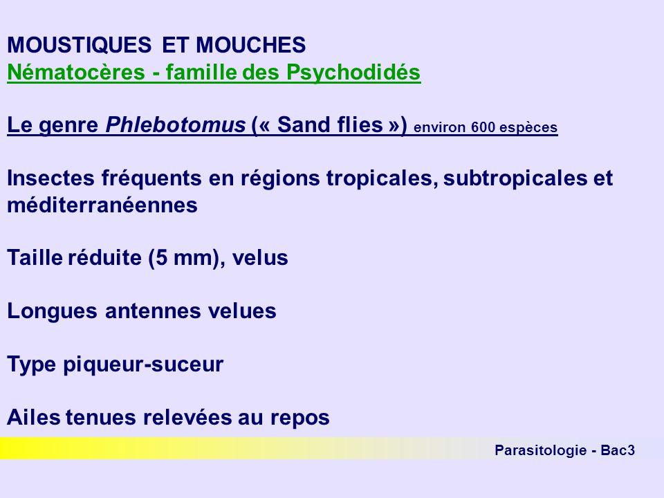 Parasitologie - Bac3 MOUSTIQUES ET MOUCHES Nématocères - famille des Psychodidés Le genre Phlebotomus (« Sand flies ») environ 600 espèces Insectes fr