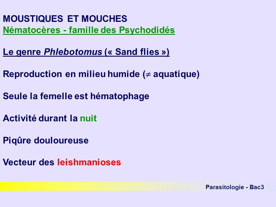 Parasitologie - Bac3 MOUSTIQUES ET MOUCHES Nématocères - famille des Psychodidés Le genre Phlebotomus (« Sand flies ») Reproduction en milieu humide (