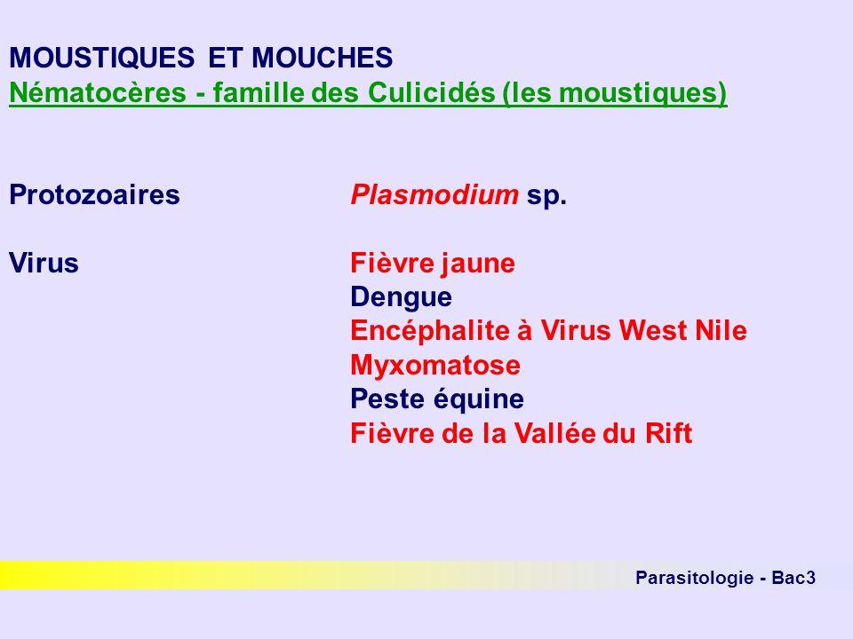 Parasitologie - Bac3 MOUSTIQUES ET MOUCHES Nématocères - famille des Culicidés (les moustiques) ProtozoairesPlasmodium sp. VirusFièvre jaune Dengue En
