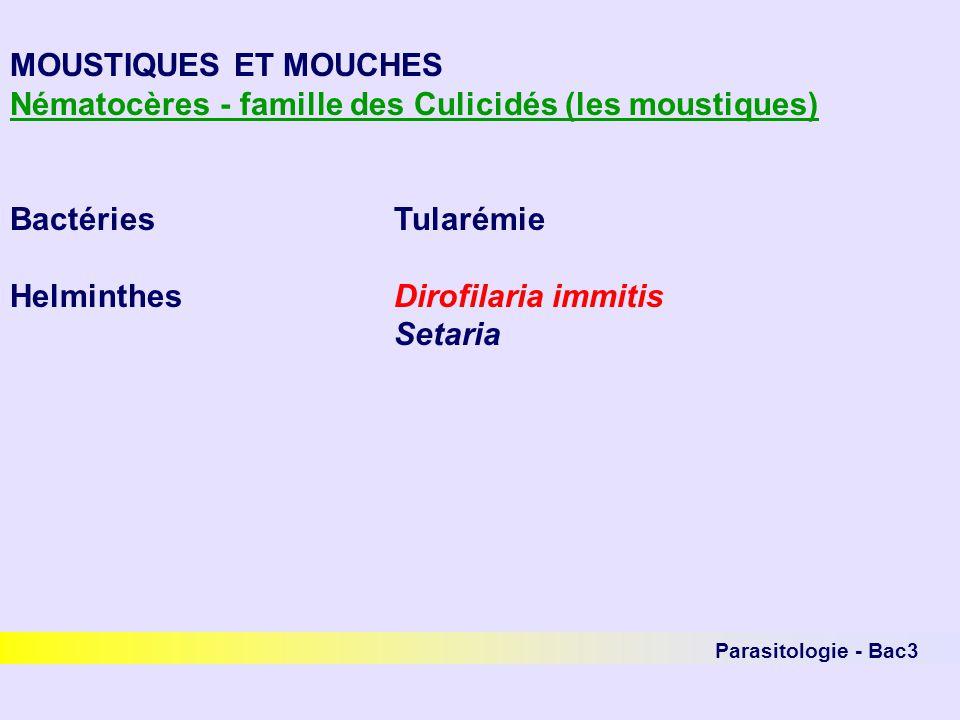 Parasitologie - Bac3 MOUSTIQUES ET MOUCHES Nématocères - famille des Culicidés (les moustiques) BactériesTularémie HelminthesDirofilaria immitis Setar