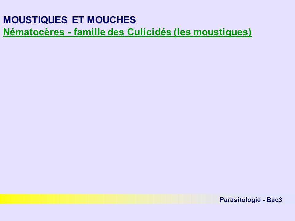 Parasitologie - Bac3 MOUSTIQUES ET MOUCHES Nématocères - famille des Culicidés (les moustiques)