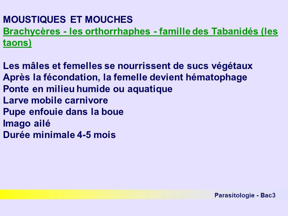 Parasitologie - Bac3 MOUSTIQUES ET MOUCHES Brachycères - les orthorrhaphes - famille des Tabanidés (les taons) Les mâles et femelles se nourrissent de