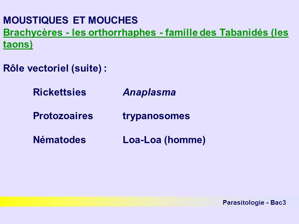 Parasitologie - Bac3 MOUSTIQUES ET MOUCHES Brachycères - les orthorrhaphes - famille des Tabanidés (les taons) Rôle vectoriel (suite) : RickettsiesAna