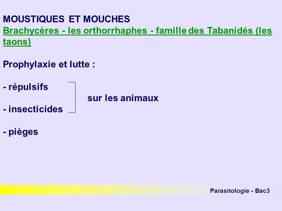 Parasitologie - Bac3 MOUSTIQUES ET MOUCHES Brachycères - les orthorrhaphes - famille des Tabanidés (les taons) Prophylaxie et lutte : - répulsifs sur