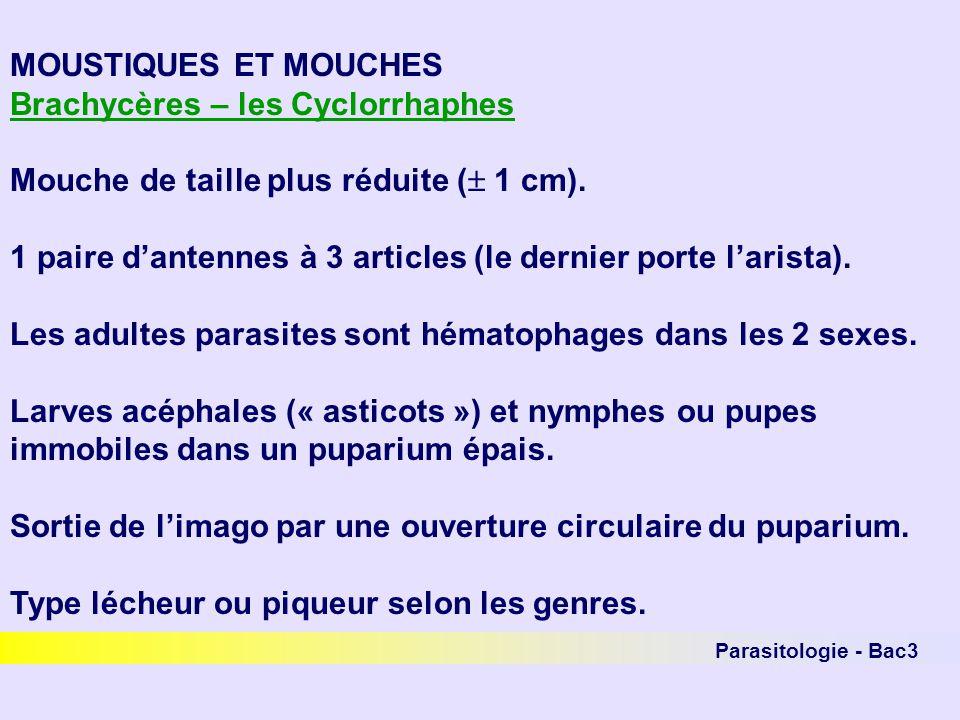 Parasitologie - Bac3 MOUSTIQUES ET MOUCHES Brachycères – les Cyclorrhaphes Mouche de taille plus réduite ( 1 cm). 1 paire dantennes à 3 articles (le d