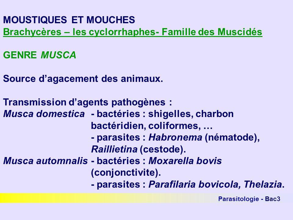 Parasitologie - Bac3 MOUSTIQUES ET MOUCHES Brachycères – les cyclorrhaphes- Famille des Muscidés GENRE MUSCA Source dagacement des animaux. Transmissi
