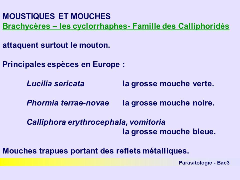 Parasitologie - Bac3 MOUSTIQUES ET MOUCHES Brachycères – les cyclorrhaphes- Famille des Calliphoridés attaquent surtout le mouton. Principales espèces