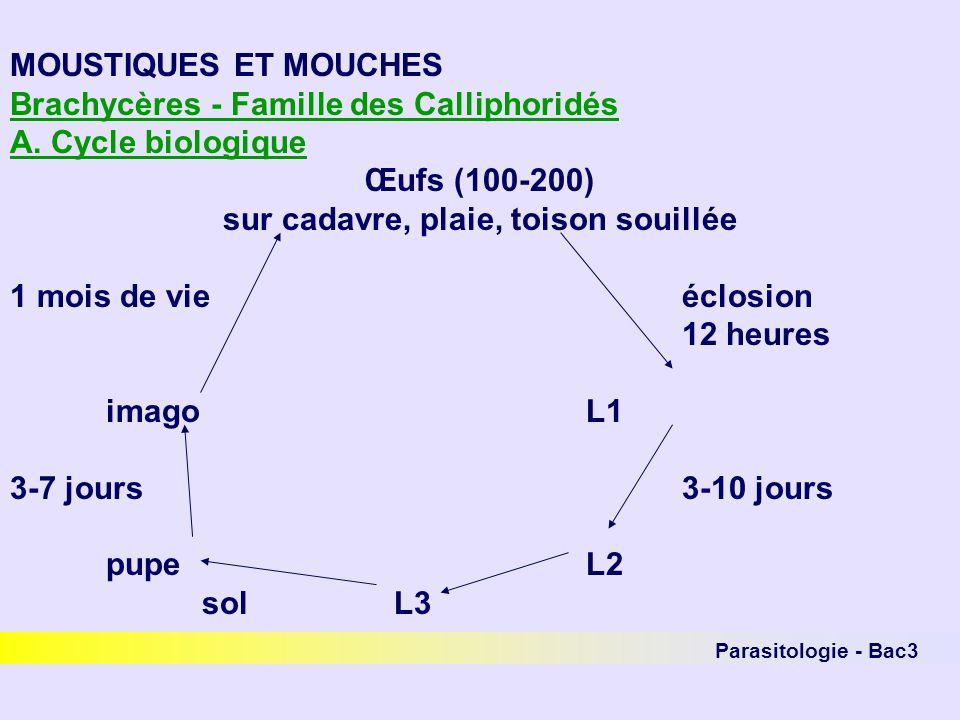 Parasitologie - Bac3 MOUSTIQUES ET MOUCHES Brachycères - Famille des Calliphoridés A. Cycle biologique Œufs (100-200) sur cadavre, plaie, toison souil